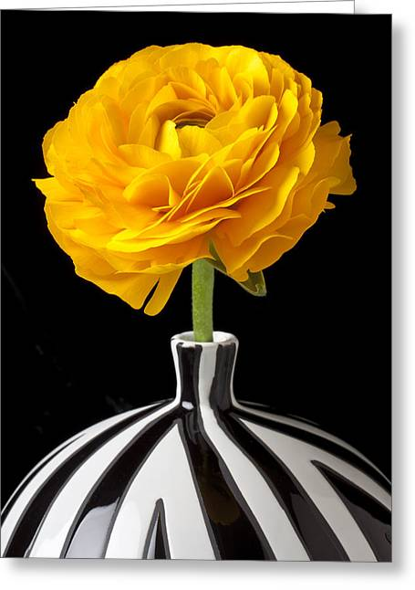 Yellows Greeting Cards - Yellow Ranunculus In Striped Vase Greeting Card by Garry Gay