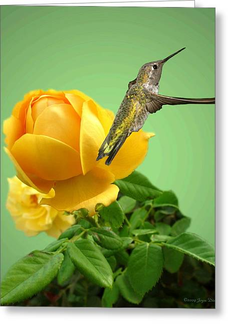 Numbers Plus Photography Greeting Cards - Yellow Rose and Hummingbird 2 Greeting Card by Joyce Dickens