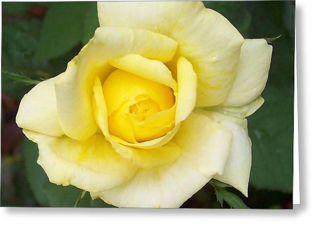 Anna Villarreal Garbis Greeting Cards - Yellow Rose Greeting Card by Anna Villarreal Garbis