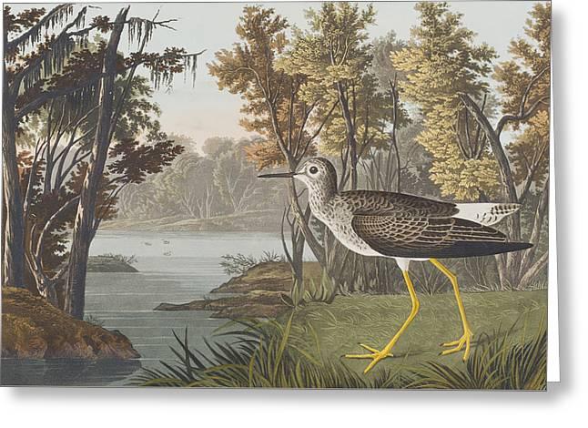 Yellows Drawings Greeting Cards - Yellow Shank Greeting Card by John James Audubon