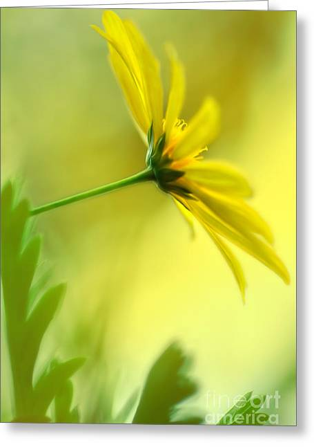 Yellow Stamen Greeting Cards - Yellow Spring Daisy Abstract by Kaye Menner Greeting Card by Kaye Menner