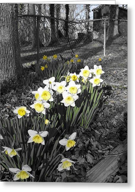 Julian Bralley Greeting Cards - Yellow Spring Greeting Card by Julian Bralley