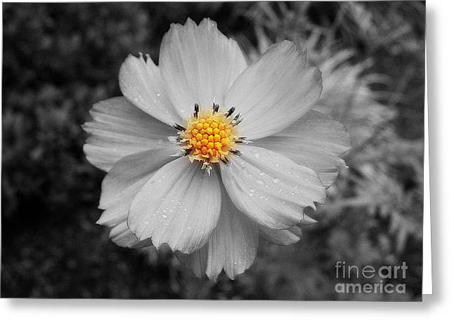 Focal Color Art Greeting Cards - Yellow Stamen Greeting Card by Patti Whitten