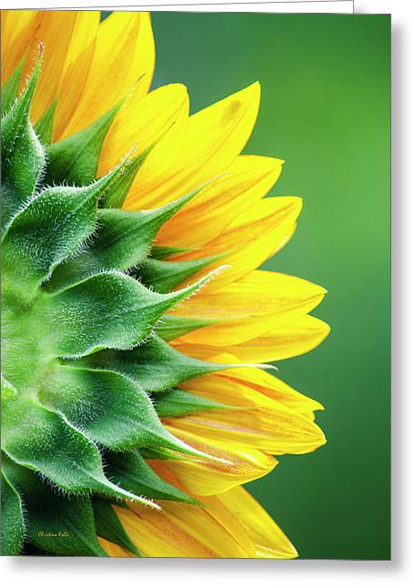 Yellow Sunflower Greeting Card by Christina Rollo