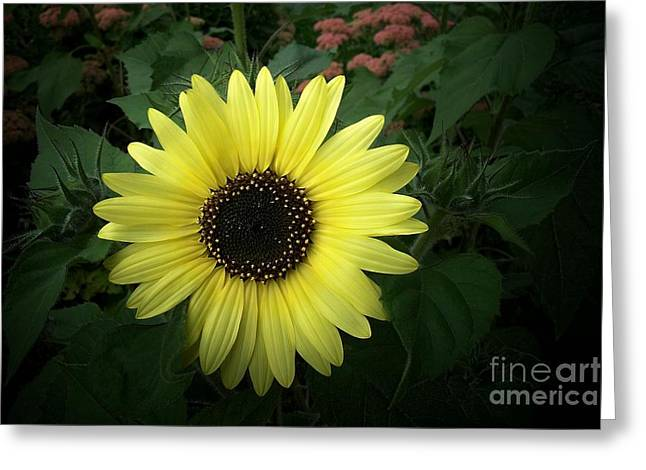Yellow Sunflower Digital Greeting Cards - Yellow Sunflower Greeting Card by Marjorie Imbeau