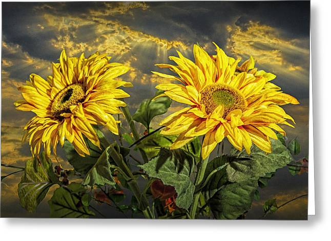 Randy Greeting Cards - Yellow Sunflowers with Sunbeams Greeting Card by Randall Nyhof