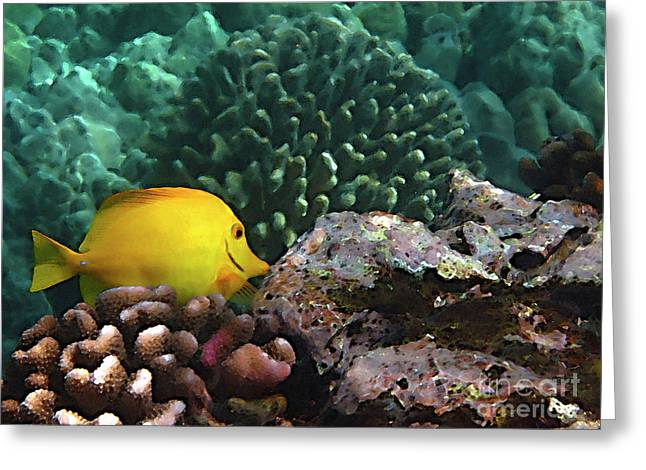 Reef Fish Greeting Cards - Yellow Tang on the Reef Greeting Card by Bette Phelan