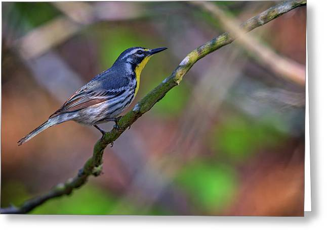 Yellow-throated Warbler Greeting Card by Rick Berk