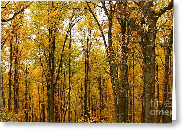 Skinny Greeting Cards - Yellow Trees Greeting Card by Alexa Gurney