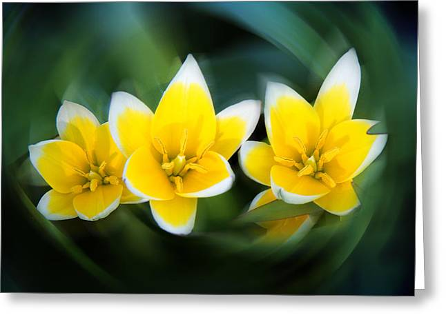 Green And Yellow Greeting Cards - Yellow Trio Greeting Card by Milena Ilieva