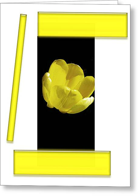 Yellow Tulip 3 Of 3 Greeting Card by Tina M Wenger