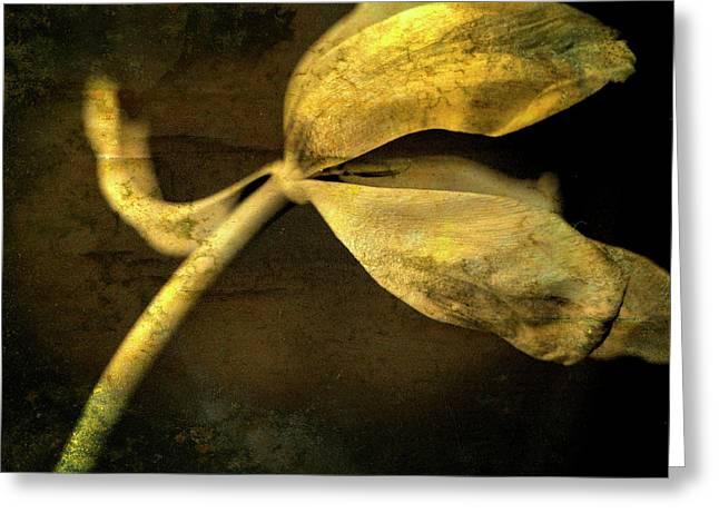 Life Matters Greeting Cards - Yellow tulip Greeting Card by Bernard Jaubert