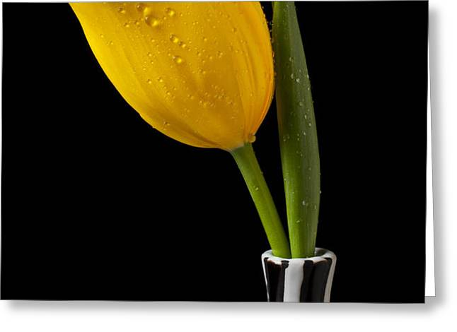 Yellow tulip in striped vase Greeting Card by Garry Gay