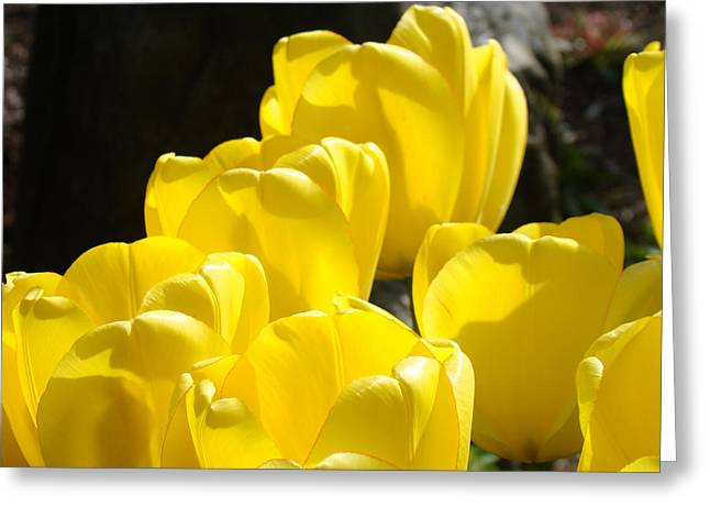 Yellow Tulips Floral art prints Nature Garden Greeting Card by Baslee Troutman