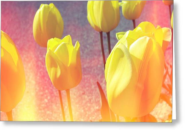 Photograph Greeting Card featuring the photograph Yellow Tulips With Pink by Michelle Calkins