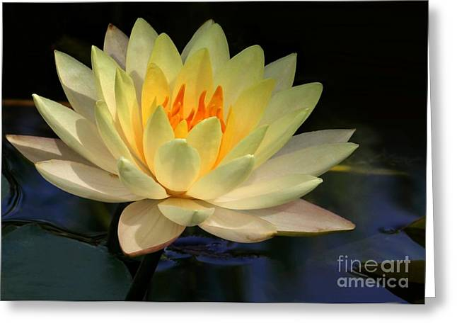Water Garden Greeting Cards - Yellow Water Lily Elegance Greeting Card by Sabrina L Ryan