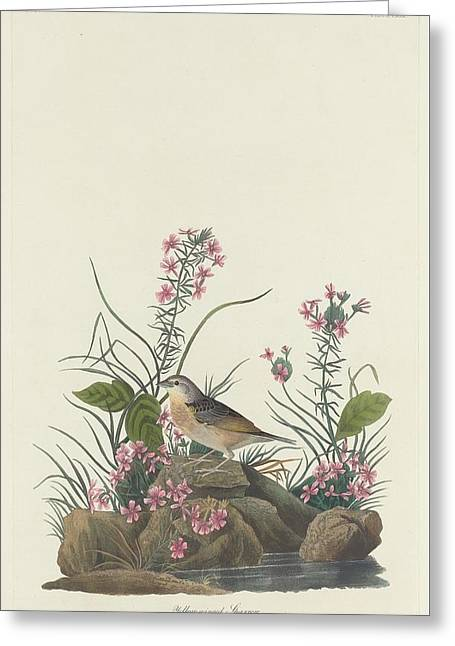 Yellow-winged Sparrow Greeting Card by John James Audubon