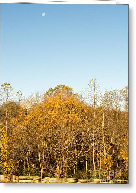 Yellow Yellow Everywhere - Natchez Trace Greeting Card by Debra Martz