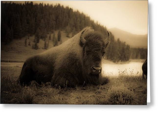 Bison Greeting Cards - Yellowstone Bison 2 Greeting Card by Patrick  Flynn