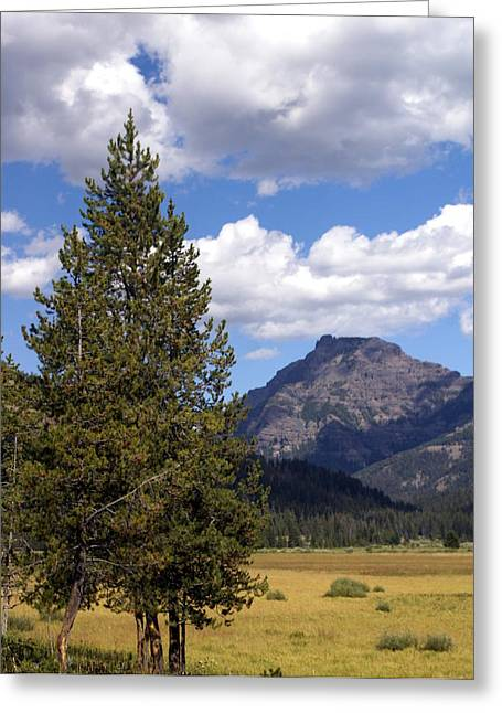 Marty Koch Greeting Cards - Yellowstone Landscape Greeting Card by Marty Koch