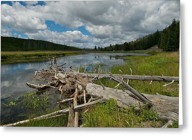 Yellowstone River Greeting Cards - Yellowstone River Greeting Card by Kris Docken