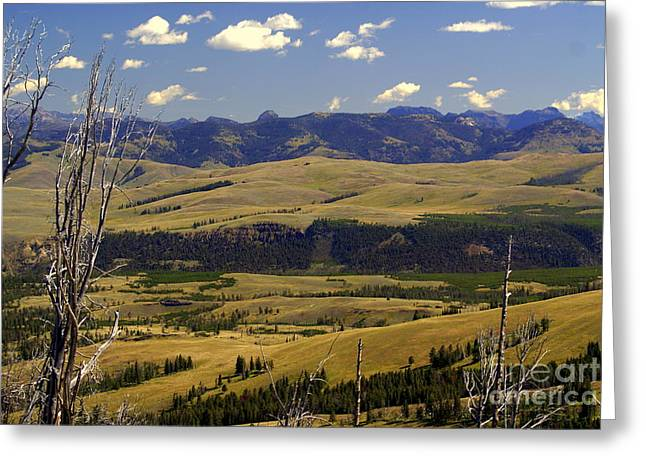 Yellowstone Vista 2 Greeting Card by Marty Koch