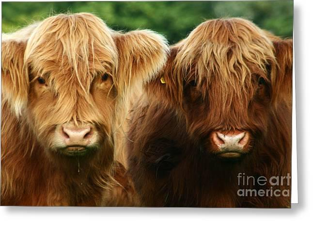 Highland Cow Greeting Cards - Yeti Cows  Greeting Card by Angel  Tarantella