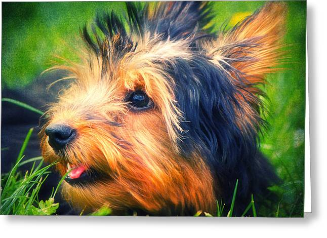 Clever Mixed Media Greeting Cards - Yorki Greeting Card by Angela Doelling AD DESIGN Photo and PhotoArt