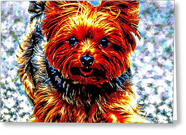 Puppies Digital Greeting Cards - Yorkie Greeting Card by Don Barrett