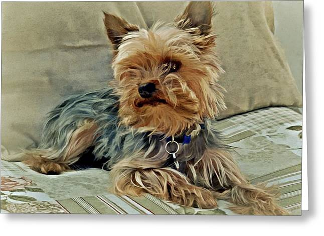 Puppies Photographs Greeting Cards - Yorkie Love Greeting Card by Patricia Strand