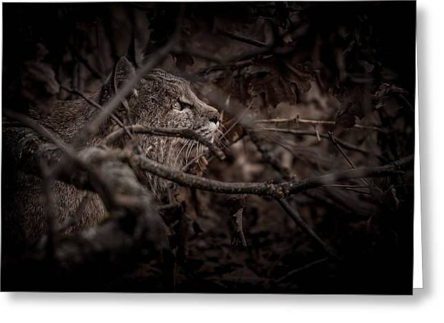Yosemite Bobcat  Greeting Card by Ralph Vazquez