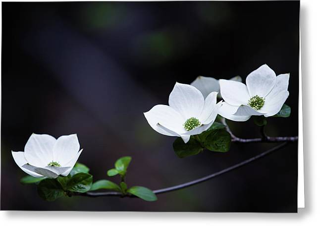 Yosemite Dogwoods Greeting Card by Larry Marshall