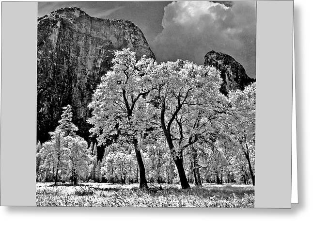 Monolith Greeting Cards - Yosemite Valley Black Oaks Greeting Card by Robert Clemens