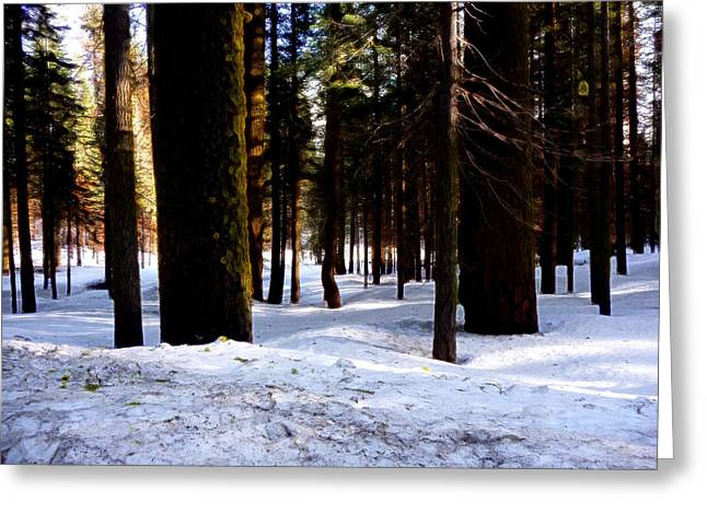 Yosemite Greeting Cards - Yosemite Winter Greeting Card by Tim Tanis