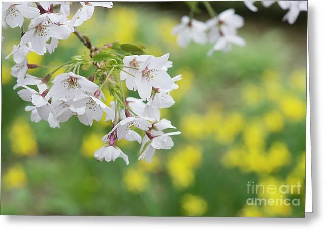 Yoshino Cherry Tree Blossom Greeting Card by Tim Gainey