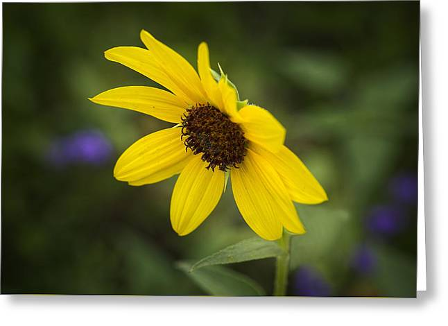 Yellow Sunflower Greeting Cards - You Are Mine At Last Greeting Card by Lucinda Walter