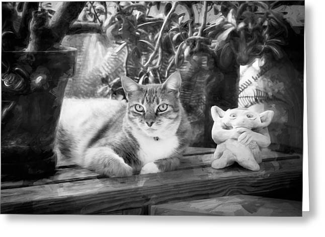Easy Going Greeting Cards - You Both Lookin at Me Ginger Cat BW Greeting Card by Rich Franco