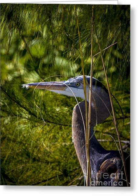 Spring Scenes Greeting Cards - You Cant See Me Greeting Card by Marvin Spates