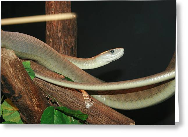 Black Mamba Greeting Cards - You Dont Want None Of This Greeting Card by David Dunham