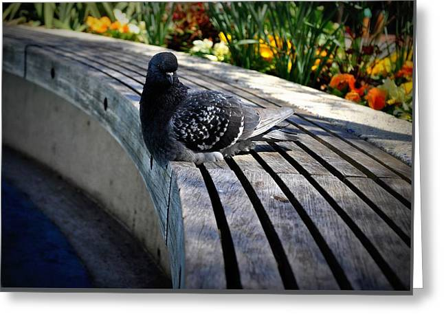 You Gotta Be Pigeon Me Greeting Card by Brynn Ditsche