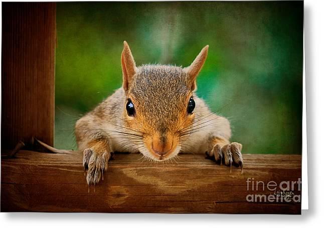 Squirrel Digital Greeting Cards - You Rang Greeting Card by Lois Bryan