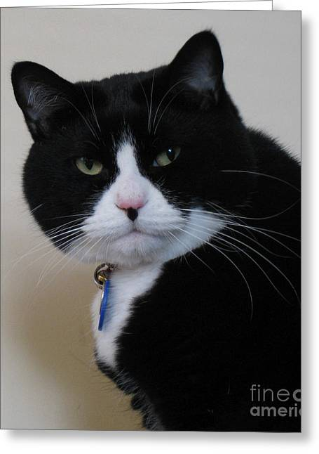 Oreo Photographs Greeting Cards - You What Greeting Card by James E Weaver