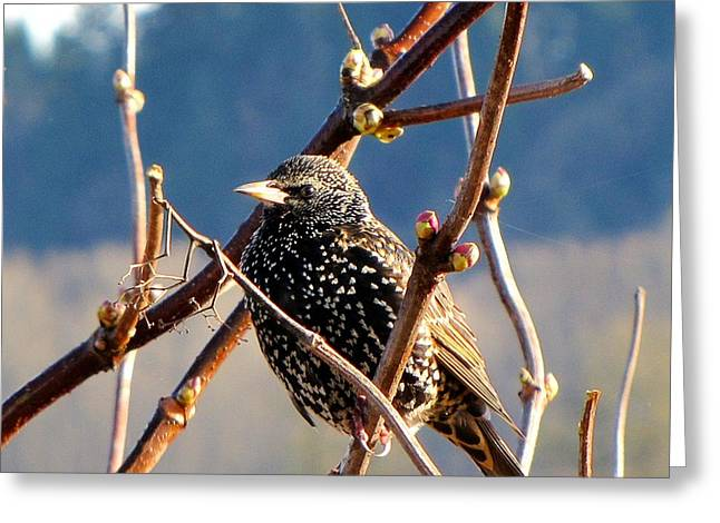 Wildlife Refuge. Greeting Cards - Young Bird  Greeting Card by Don Siebel