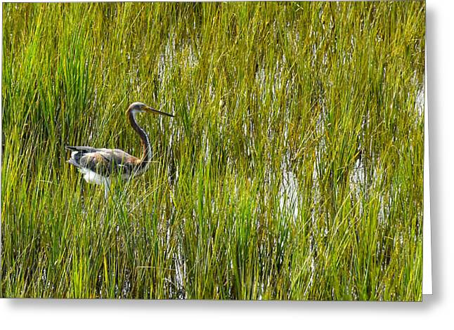 Nature Center Greeting Cards - Young Blue Heron in the Marsh Greeting Card by Joan Kaplan