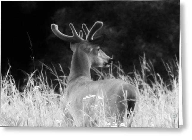 Deer Camp Greeting Cards - Buck Dance Greeting Card by Keri West