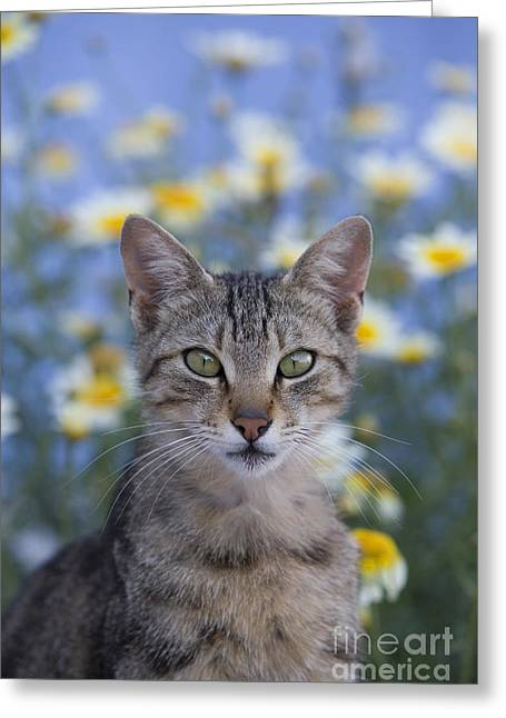 Gray Hair Greeting Cards - Young Cat In Greece Greeting Card by Jean-Louis Klein & Marie-Luce Hubert