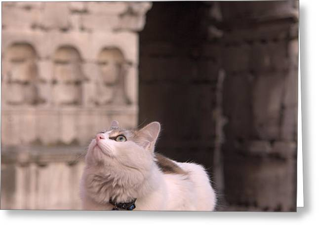 Young cat old monument Greeting Card by Fabrizio Ruggeri
