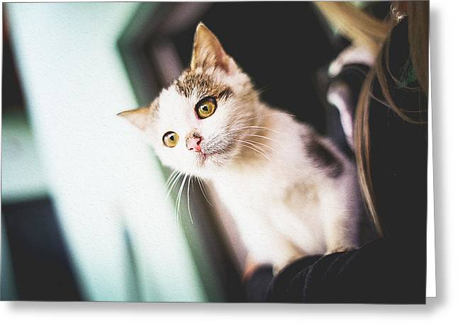 House Pet Greeting Cards - Young Cat Greeting Card by Queso Espinosa