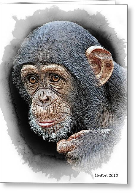 Chimpanzee Digital Greeting Cards - Young Chimp Greeting Card by Larry Linton