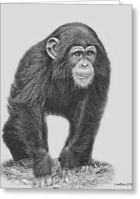 Chimpanzee Digital Greeting Cards - Young Chimpanzee 2 Greeting Card by Larry Linton